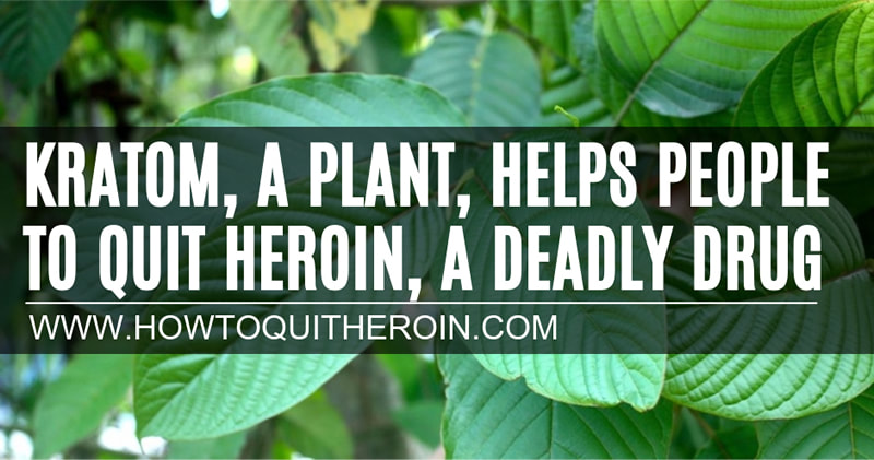 Kratom, a plant, helps people to quit heroin, a deadly street drug